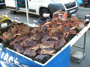 spider or brown crabs from Blainville