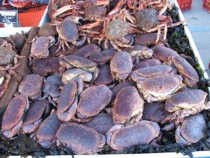 crabs again